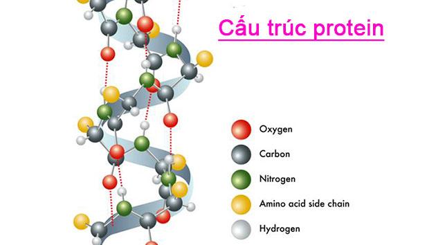 Cấu trúc protein