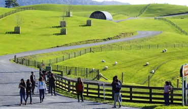 Đồng cỏ New Zeland